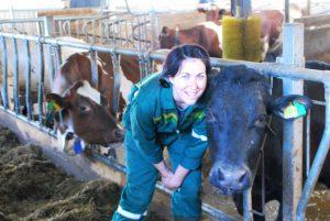 Denne kua har Klare ett spesielt forhold til, hun har fulgt den fra hun var kalv og den er spesielt snill.